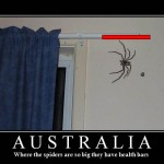 Australia, The Land Of Spiders With Hp And Mana Bars