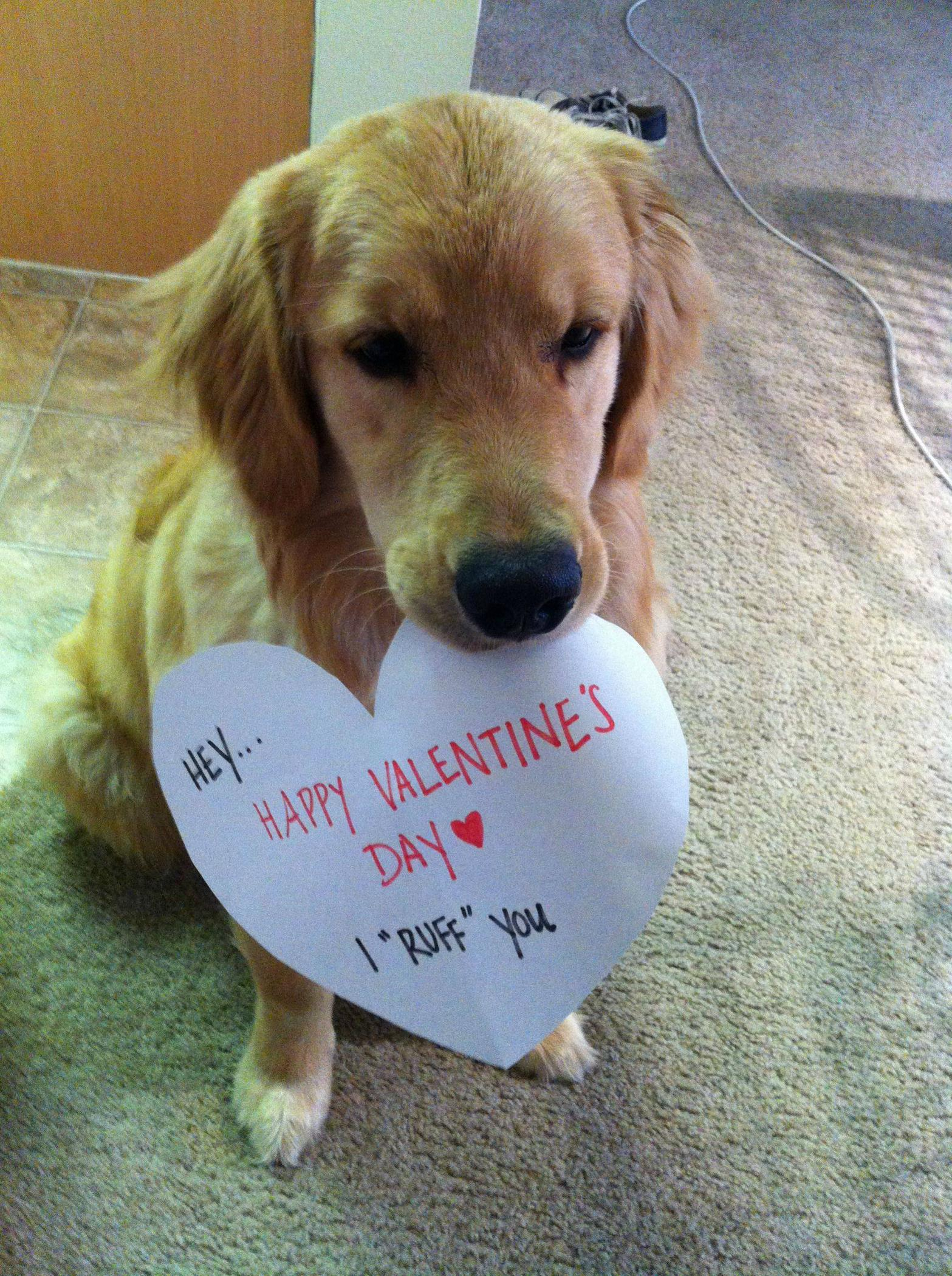 ugly dog valentines day memes - Dog Wishes You A Happy Valentine's Day Ruff You