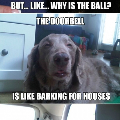 Sarcastic Dog Meme Doesn T Want To Cankle