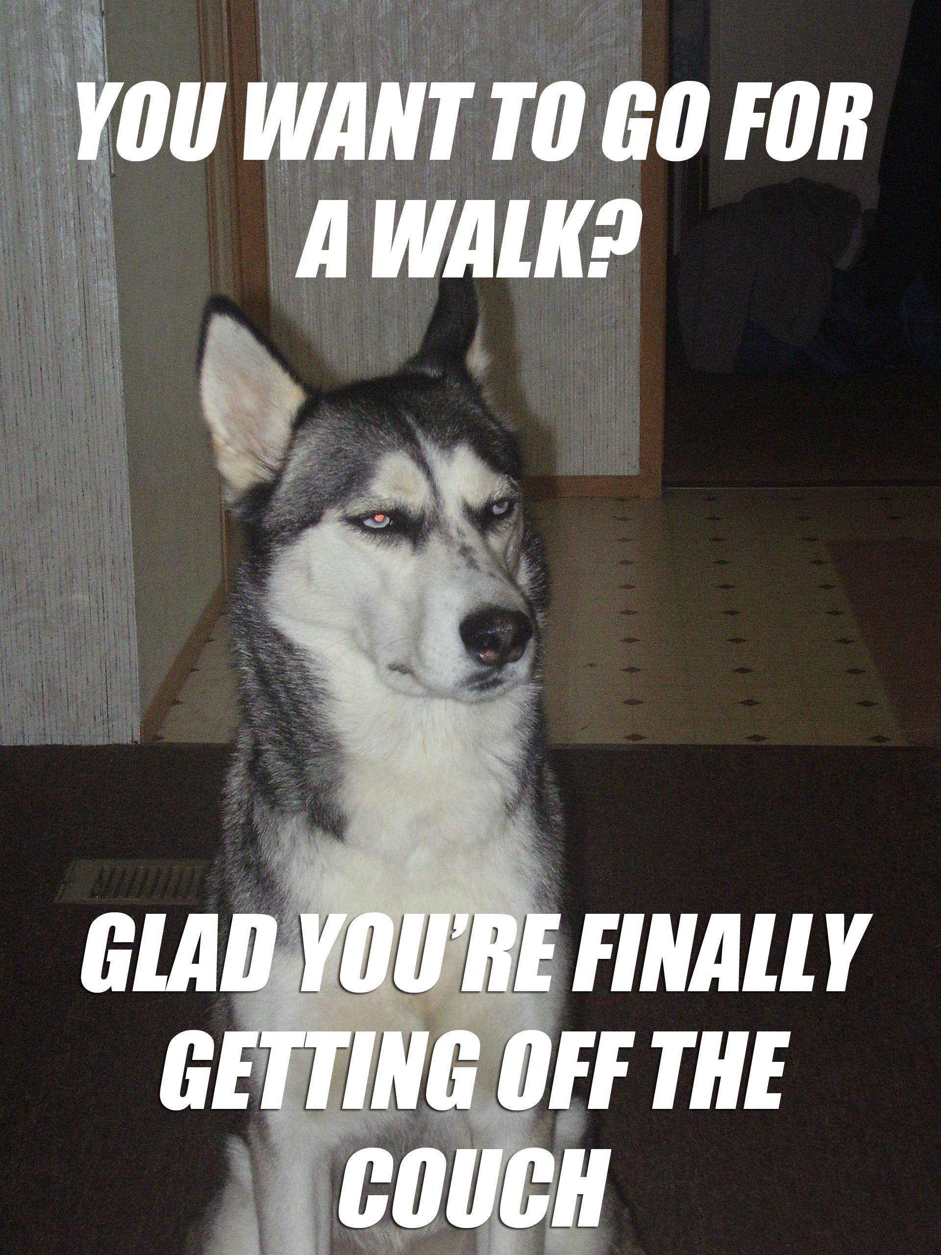 Sarcastic Dog Meme On Going For A Walk