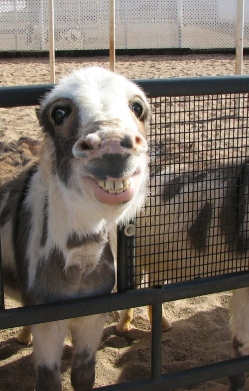 funny donkey faces - photo #27