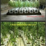 A Multi-Million Dollar Pot Growing Operation In A Tennessee Home