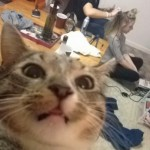 Cat Takes A  Selfie With The Friends In The Background