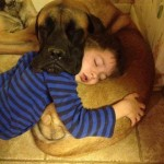 Dog & Little Boy Sleeping & Drooling Comfortably On Each Other