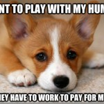 First World Dog Problem Meme Wants To Play