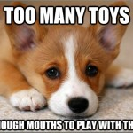 First World Problem Dog Has Too Many Toys