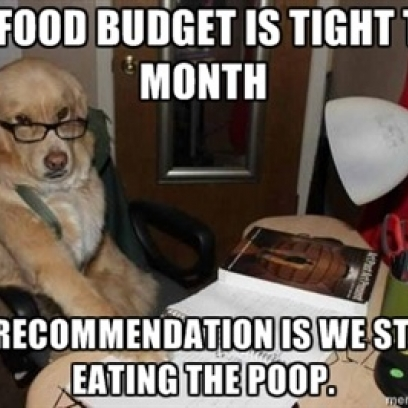 Financial Advisor Dog Meme Balances The Household Budget_408x408 financial advisor dog meme balances the household budget