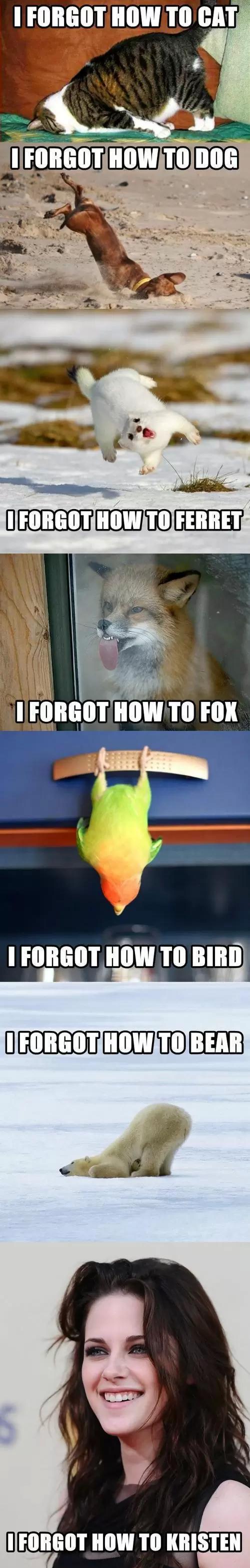 I Forgot How To Meme
