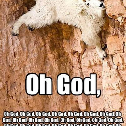 mountain goat meme Gallery