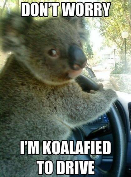Koalafied Koala Meme