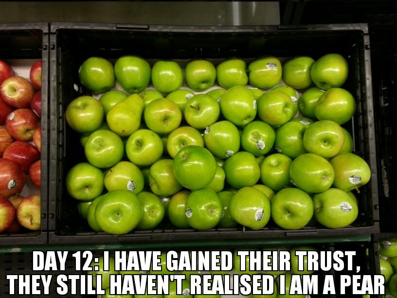 Pear-Goes-Undercover-In-The-Apples-Neighborhood.jpg