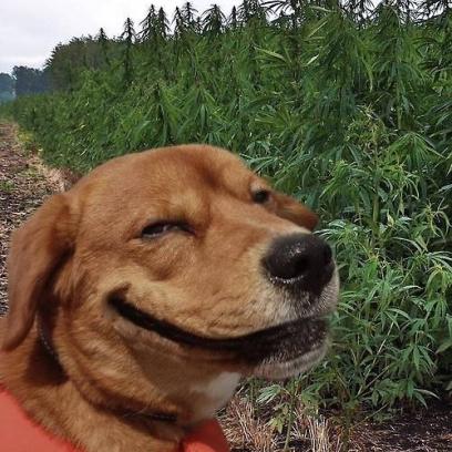 Sad Dog Looks Like It Punshied Itself Long Enough With