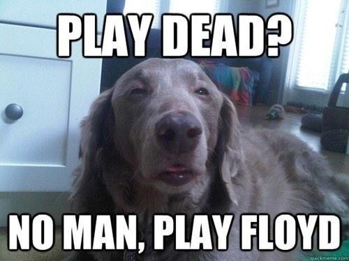 Really High Dog Meme Wants Some Pink Floyd really high dog meme wants some pink floyd