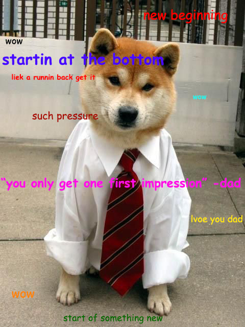 Shibe Dog Meme Is Ready For New Beginnings At Its New Job shibe dog meme is ready for new beginnings at its new job