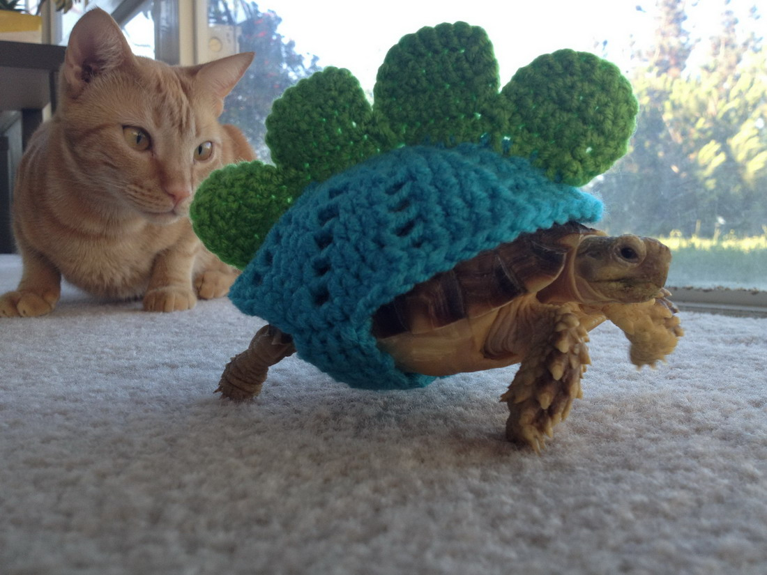 Cat Is In Awe Over The Amazing Turtle Dinousaur Beast