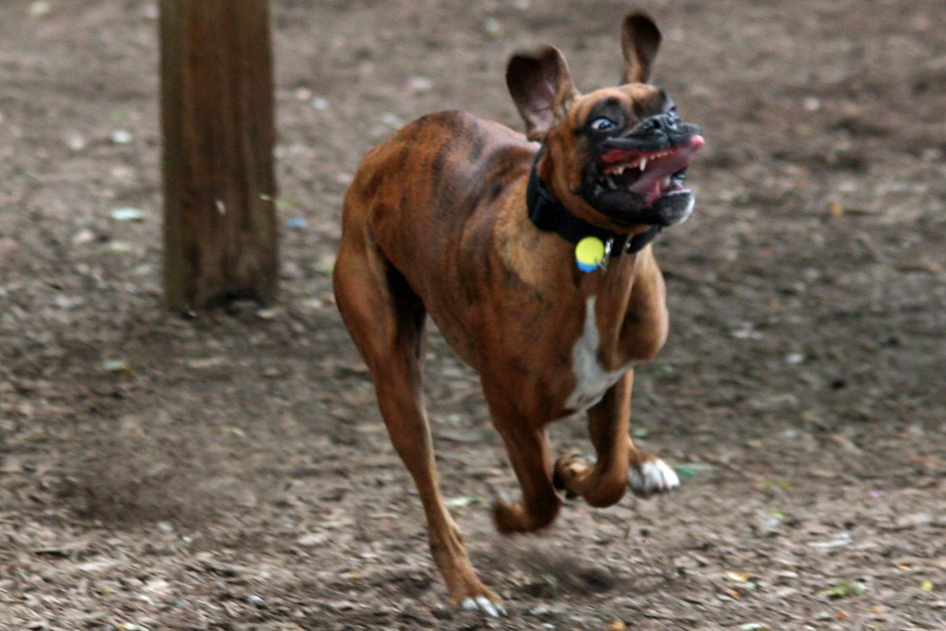 Dog Goes Super Full De...