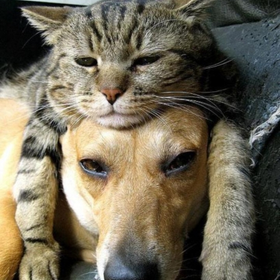 [Image: Dog-Puts-On-His-Thinking-Cat-Before-Bed-...08x408.jpg]