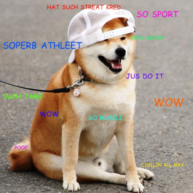 Shibe Doge Meme Is So Muscle With His Cool New Hat shibe doge meme is so muscle with his cool new hat