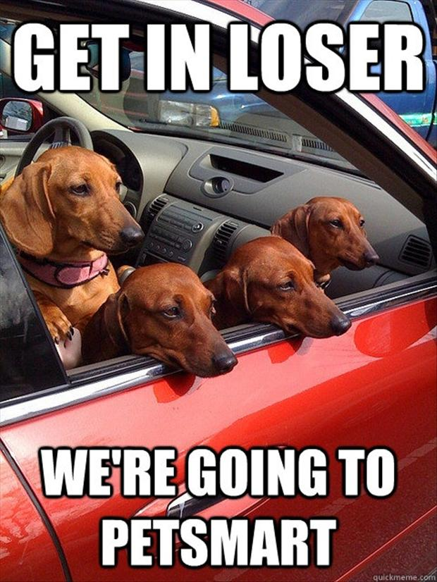 Mean Dogs Meme Parody Of Mean Girls mean dogs meme parody of mean girls