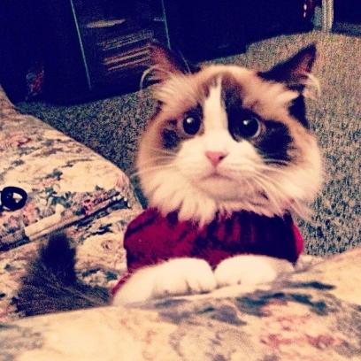 Sad-Kitty-Looks-At-You-Through-a-Potato-Screen_408x408.jpg