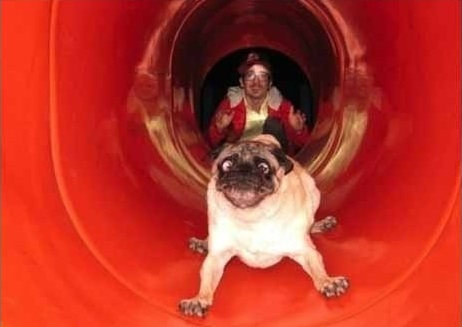 Derpy Cartoon Looking Dog Goes Down a Kid's Slide At a Park